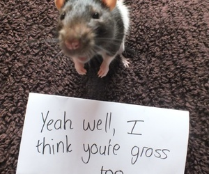 mouse, cute, and funny image