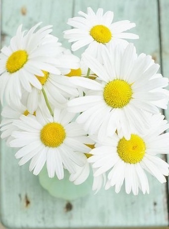 flowers, daisy, and pastel image