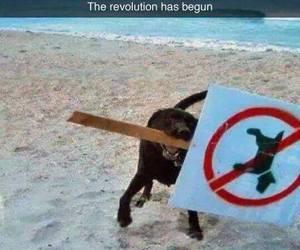 dog, funny, and revolution image
