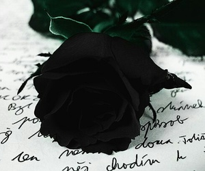 rose, black, and black rose image