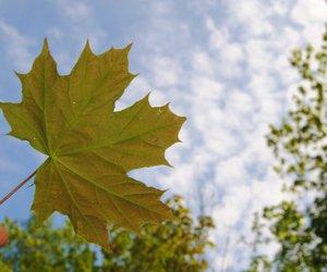 leaf, sky, and trees image