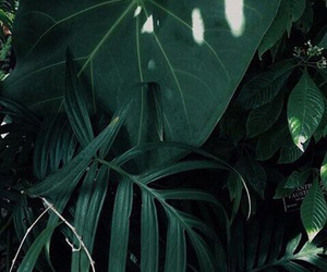 green, plants, and refreshing image