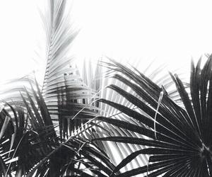 beautiful, black, and minimalism image