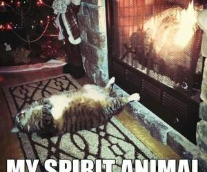 animal, funny, and spirit image