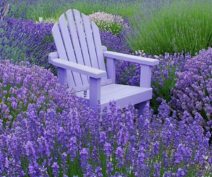chair, lavender, and purple image