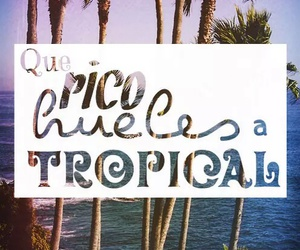 tropical, palmar, and caloncho image