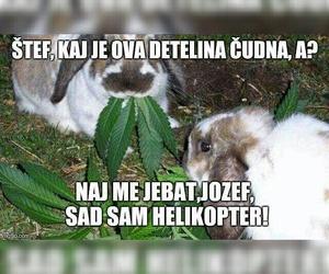 bunny, hahahaah, and funny image