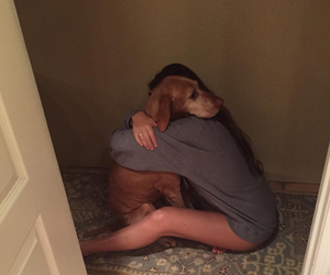 dog, real, and hug image
