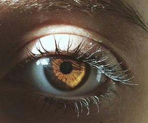 eyes, eye, and brown image