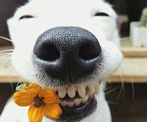 dog, flowers, and smile image