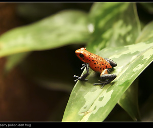 frog, nature, and photography image