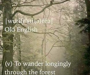 forest, mystery, and words image