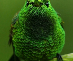 green and bird image
