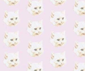 gatito and wallpaper image