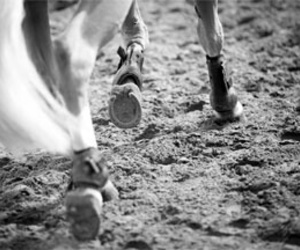 chevaux and equitation image