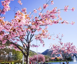 bergen, spring, and nature image
