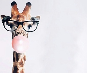 giraffe, animal, and wallpaper image