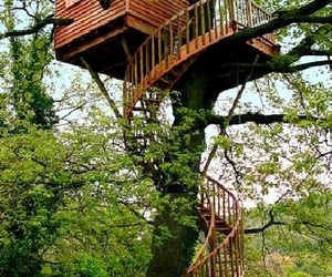tree house, house, and nature image
