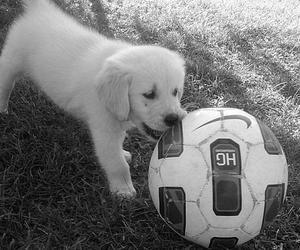 animal, animals, and ball image
