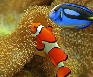 fish, dory, and finding nemo image