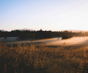 fog, nature, and morning image