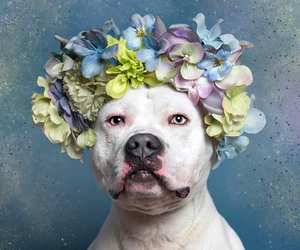 dog, flower crown, and sophie gamand image