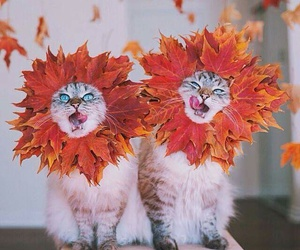 cat, autumn, and cute image
