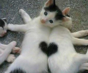 cat, heart, and kitten image