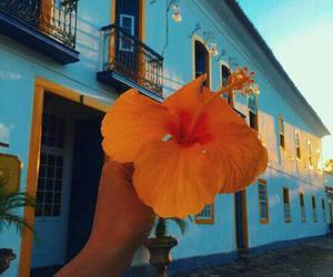 flowers, orange, and blue image