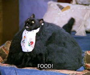 food, cat, and funny image