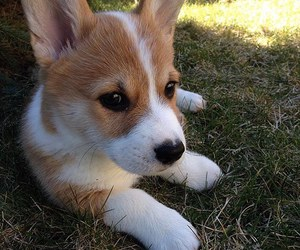 baby, cute animal, and puppy image