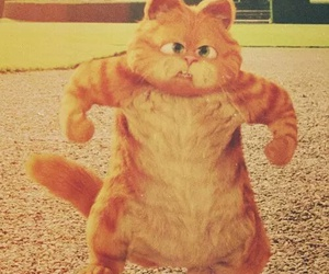cat, garfield, and cute image