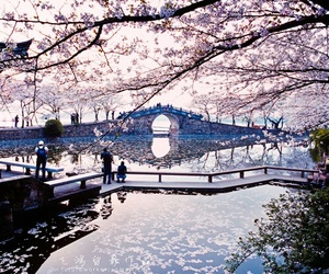 japan, nature, and flowers image
