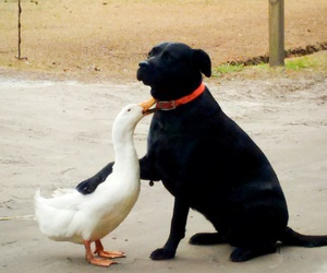 animals, dog, and goose image