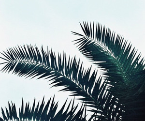 summer, palms, and green image