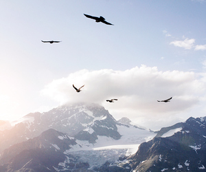 birds, mountains, and nature image