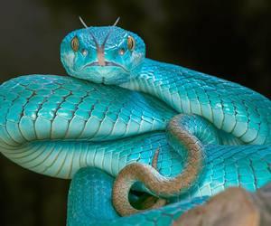 snake, blue, and animal image