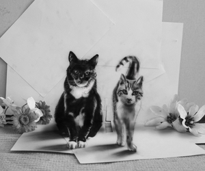 3d, cats, and art image
