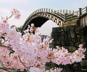 blossom, inspiration, and tokyo image