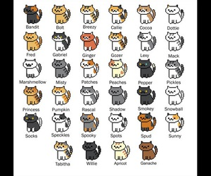 cat, cats, and fluffy image