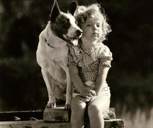 shirley temple, black and white, and dog image