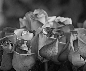 black and white, rose, and photography image