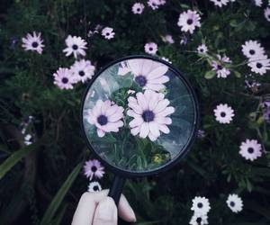 daisies, flowers, and magnifying glass image