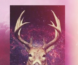 hipster and wallpapers image