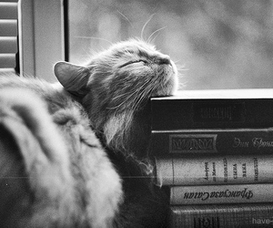 book, love cat, and cute image