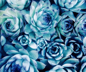 art, blue, and succulents image