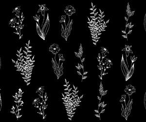 desktop, flowers, and wallpaper image
