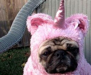 unicorn, dog, and pink image