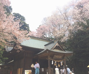 cherry blossom, japan, and japanese image