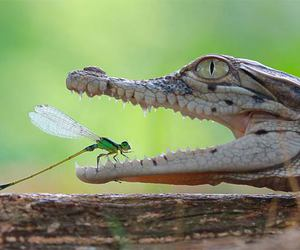brave, crocodile, and insect image